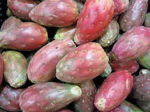 Red prickly pear Stock Image