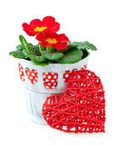 Red primroses and heart Stock Photos