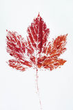 Red printed fall background