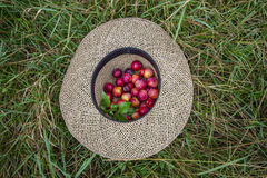 Red prunes in a straw hat Stock Photos