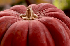 Red Pumpkin Royalty Free Stock Photography