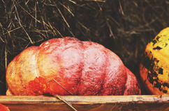 Red pumpkin in wooden box Stock Photography
