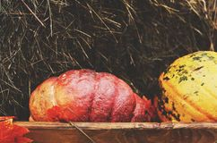 Red pumpkin in wooden box Royalty Free Stock Photos