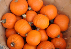 Red pumpkins in basket. A lot of red pumpkins on street market Royalty Free Stock Photos