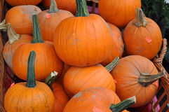 Red pumpkins in market. A lot of red pumpkins on street market Royalty Free Stock Photo