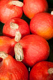 Red pumpkins in the market Royalty Free Stock Photos