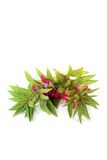 Red and purple Balsam Stock Images