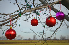 Red and Purple Christmas Ornaments Stock Images