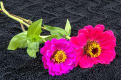Red and purple flower Stock Photography