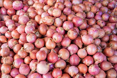 Red or purple onions Stock Photography