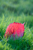 Red purple orange  leaves on green grass. Royalty Free Stock Photo