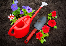 Red and purple petunia flowers with watering can and shovel Royalty Free Stock Photography