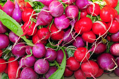 Red and purple radishes Royalty Free Stock Photo