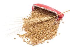 Red purse with wheat ears. On white Royalty Free Stock Photos