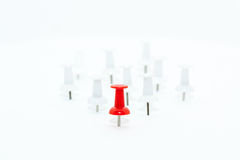 Red Push pin in front and white push pins at back Stock Photography