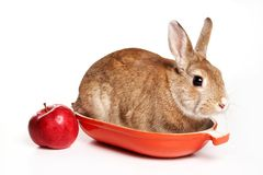 Red rabbit and apples on a tray. Isolated on white royalty free stock image
