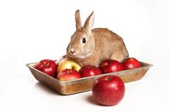 Red rabbit and apples on a tray. Isolated on white royalty free stock images