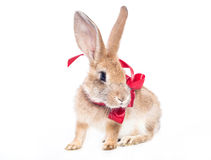 Red rabbit bow Royalty Free Stock Photos