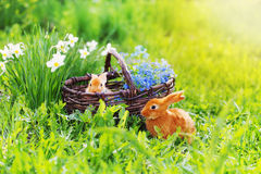Red rabbits outdoor Royalty Free Stock Photo