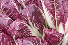 Red radicchio background. Detail of bunch stock image