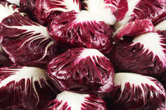 Red radicchio chicory. Leaves of red radicchio chicory Stock Photos