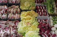 Red radicchio and chicory salad Stock Photos