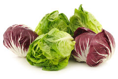 Red radicchio lettuce and green little gemlettuce. On a white background Royalty Free Stock Photography