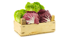 Red radicchio lettuce and green little gemlettuce. In a wooden box on a white background Royalty Free Stock Photo