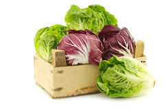 Red radicchio lettuce and green little gemlettuce. In a wooden box on a white background Stock Photos