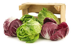 Red radicchio lettuce and green little gemlettuce. In a wooden box on a white background Stock Image