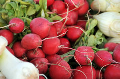 Red radish Royalty Free Stock Image