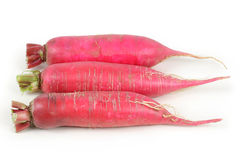 Red radish. Royalty Free Stock Photo