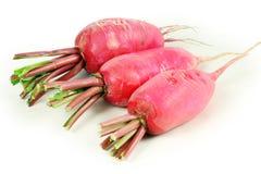 Red radish Royalty Free Stock Image