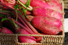 Red radish. Root vegetable food Royalty Free Stock Photography