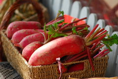 Red radish. Red skin radish vegetable root Stock Images
