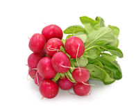Red radish stock images