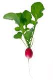 Red radish Stock Photos
