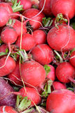 Red radish in ball shape Royalty Free Stock Photo
