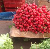 Red radish at bazaar. Food and fruit market place Royalty Free Stock Image