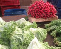 Red radish at bazaar. Food and fruit market place. lettuce and greens Stock Photography
