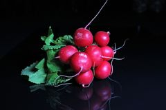 Red radish on black reflective studio background. Isolated black shiny mirror mirrored background for every concept.. Royalty Free Stock Image