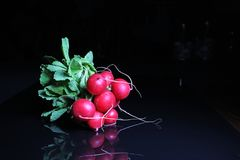 Red radish on black reflective studio background. Isolated black shiny mirror mirrored background for every concept.. Royalty Free Stock Photography