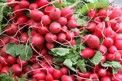 Red Radish Bunches. Bunches of red radishes on display at market for sale pungent hot Raphanus sativus of the mustard family stock photos
