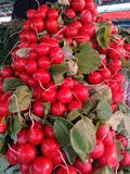 Radish bunches piled pyramid on the market counter royalty free stock photo