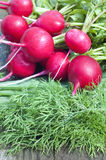 Red radish and dill. On a a wooden bench Royalty Free Stock Images