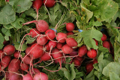 Red radish, English radish, Raphanus sativus Royalty Free Stock Photography