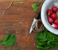 Red Radish with green leaves. In aluminum plate on a wooden background Stock Photography