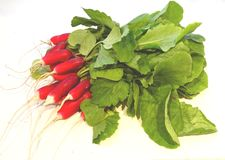 Red radish. Stock Photography