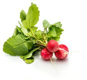 Red radish isolated Stock Images