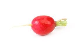 Red radish. Stock Photography